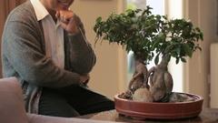 TU MS Senior man smiling and looking at bonsai tree at home / China Stock Footage