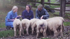 4K Farming couple talking to vet & caring for flock of sheep Stock Footage
