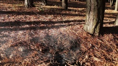 Forest ground fire under pine tree Stock Footage