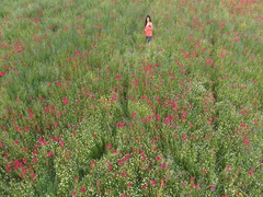 Aerial view of a beautiful woman  in the poppies field. Stock Footage
