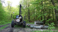 Loading wood in the forest Stock Footage