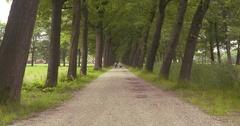Avenue of trees alongside canal in Dutch raised bog landscape Stock Footage