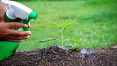 Slow motion of child hand watering small tree in garden Stock Footage