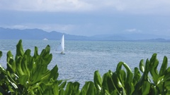WS LS Sailboat gliding across ocean, plants in foreground / Indonesia Stock Footage