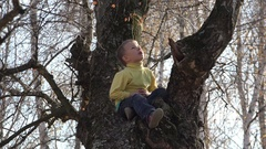 Happy child sitting up in tree, kid singing, sweet free childhood Stock Footage