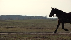 Horse pulling a wodden cart on rural road Stock Footage