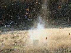 Pumpkin smashing explosion rural farm DCI 4K Stock Footage