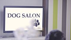 Dog salon with puppy enjoying paw feet massage on table 4K Stock Footage