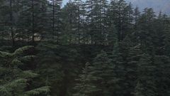 WS HA PAN Pine trees and Himalayan mountains / India Stock Footage