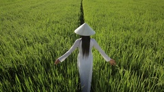 WS HA LD Young Woman Wearing Ao Dai Walking Across Rice Paddy / Hoi An, Vietnam Stock Footage