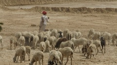 WS Goat herders with herd / Agra, India Stock Footage