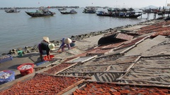 WS TD Women Laying Fish out on Beach to Dry / Hoi An, Vietnam Stock Footage