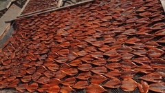 WS TU Fish Drying in Sun / Vietnam Stock Footage
