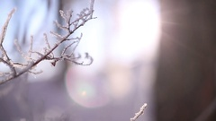 Morning in the winter forest. Stock Footage