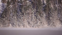 Frozen trees on the river bank. Fog. Stock Footage