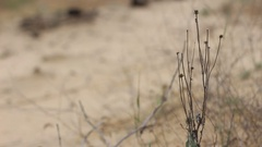Dried grass in the desert Stock Footage