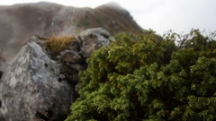 Mountain landscape with low-growing thickets of pine in foreground, tops and Stock Footage