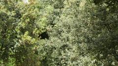 Park Borghese, Rome, Lazio, Italy, Europe Stock Footage