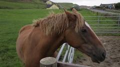 MH Horse Shaking Mane / Ireland Stock Footage