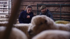 4K Vet talking to farmer & checking on sheep in interior of farm building Stock Footage