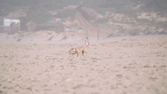 Dogs on the Beach Stock Footage