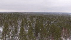 Snow on top of the trees, flying above the forest Stock Footage