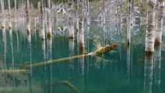 Kaindy Lake Flooded Forest Autumn 4K Stock Footage