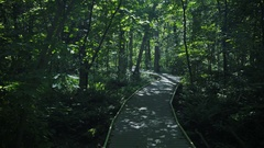 4K video of peaceful nature in Ontario Canada Stock Footage