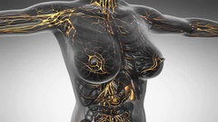 Loop science anatomy scan of woman limphatic system glowing with yellow on wh Stock Footage