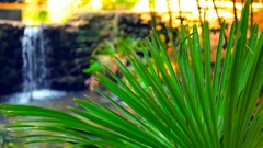 The branch of palm trees and a waterfall in the background Stock Footage