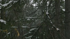 Shot through the branches harvester in a forest cutting tree on pieces Stock Footage