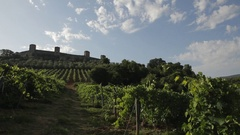 WS DS Vineyard / Tuscany, Italy Stock Footage