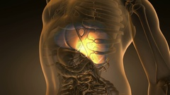 Science anatomy scan of human liver glowing with yellow Stock Footage