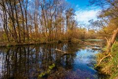 Ticino river and forest Stock Photos