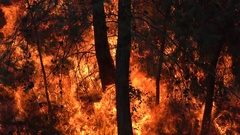 Trees and brush catch fire and burn violently. Stock Footage