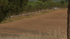 WS Car driving up rural road lined with cypress trees / Tuscany, Italy Stock Footage
