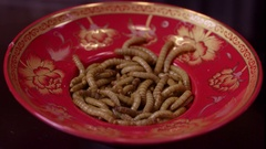 Close up shot of live mealworms on a red plate. Stock Footage