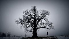Hangman tree Stock Footage
