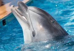 Dolphin in the pool Kuvituskuvat