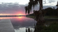 A Cypress Tree draped with Spanish Moss. Stock Footage
