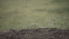 Slow motion of hand uproot small tree in vintage color tone Stock Footage