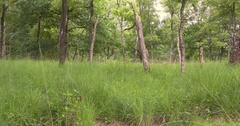Pan wet birch woodland growing at the edge of a raised bog Stock Footage