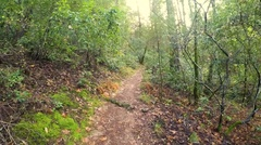 Hiking in Napa Valley, Northern California Stock Footage