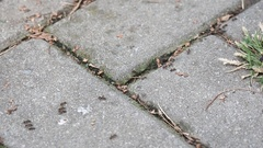 Ants running on the pavement closeup. Stock Footage