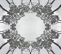 Symmetry in a forest canopy Stock Illustration