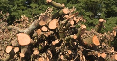 Heap of felled hardwood branches, firewood Stock Footage
