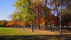 Video shot in washington dc constitution gardens fall Stock Footage