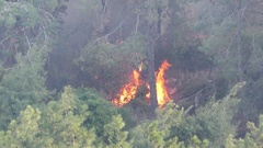 Trees in forest and brush catch fire and burn violently. Stock Footage