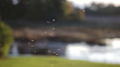 Small insects are flying in slow motion, close up shot near the river Stock Footage