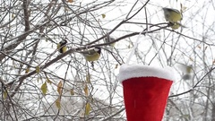 Birds pecking seeds in the winter. The trough in the Santa Claus hat Stock Footage